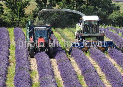 FR10 - Récolte de la lavande en Provence
